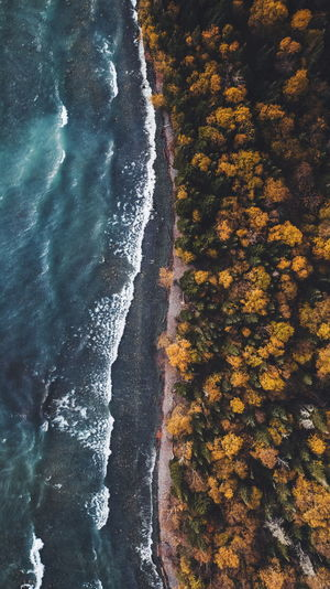 Water Nature High Angle View Autumn Beauty In Nature No People Day Sea Tree Natural Light Wanderlust Lost In The Landscape Travel Aerial Beach Lakeshore Fall Color Forest Wide Angle Waves Canada Lake Superior Fresh On Market 2017 The Great Outdoors - 2018 EyeEm Awards