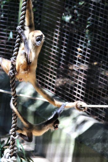 Animal Themes Animal Wildlife Animals In Captivity Bird Cage Close-up Day EyeEmAnimalLover Eyeemnaturelover EyeEmNewHere Mammal Monkeybusiness  Monkeylove Nature No People Outdoors Togetherness Zoo