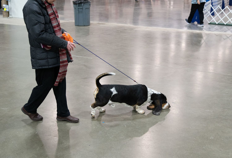 Low section of person with dog walking on floor