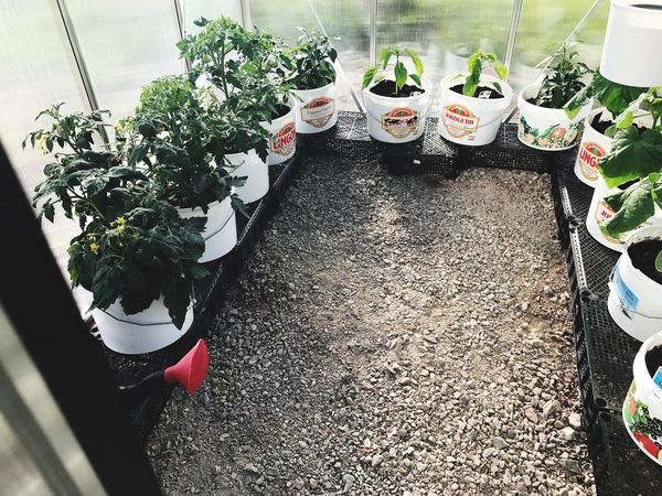 High Angle View Plant Freshness Growth Day Potted Plant Choice Food And Drink Table No People Leaf Food Indoors  Healthy Eating Nature Greenhouse Plant Nursery Close-up