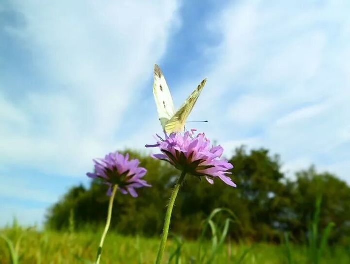 Flower Purple Butterfly - Insect Cloud - Sky Plant Sky Insect Animal Body Part Beauty Nature Beauty In Nature Close-up No People Outdoors Flower Head Thistle Fragility Day Beauty In Nature Nature First Eyeem Photo First Eyem Photo First Eyem Photograpy