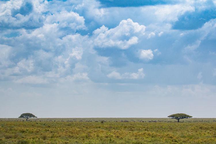 Africa African Beauty Beauty In Nature Cloud - Sky Day Field Grass Landscape Nature Ngorongoro Crater No People Outdoors Rural Scene Safari Scenics Serengeti Serengeti National Park Sky Storm Cloud Tanzania