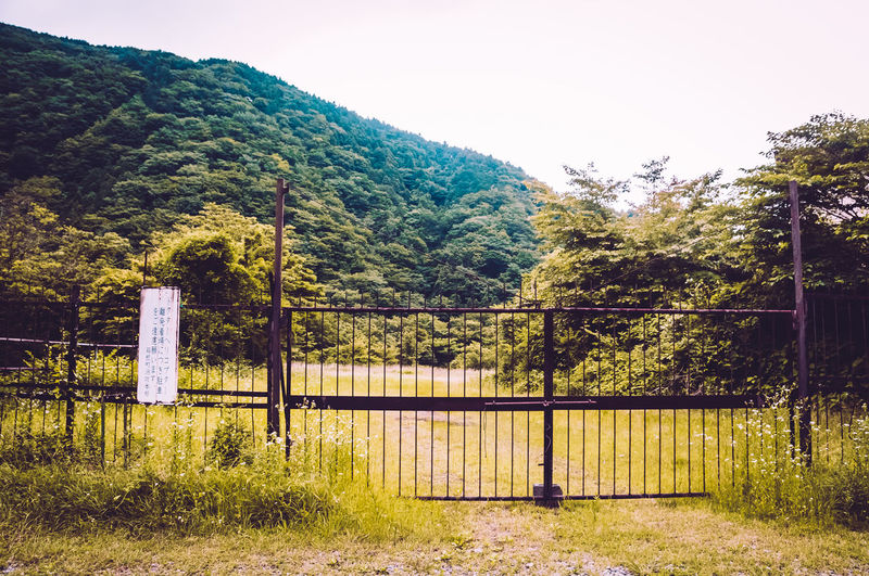 Beauty In Nature Clear Sky Day Grass Green Color Growth Japan Japan Photography Nature No People Outdoors Protection Scenics Sky Street Tranquility Tree