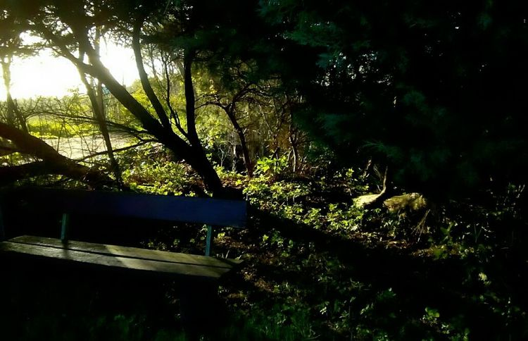 Sunlight And Shadow Forestwalk Beauty Of Nature Nice Day No People Sky Branch Tranquility Tree Area Outdoors Day Rural Scene Grass Breaktime Close-up Sitting In The Sun