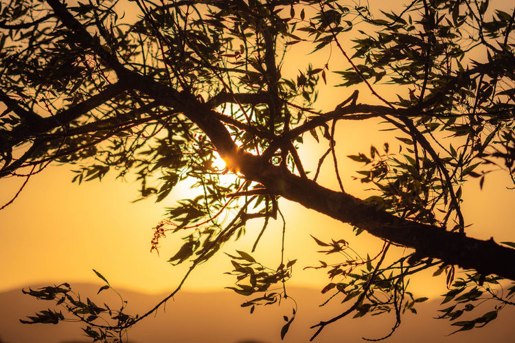 golden evening