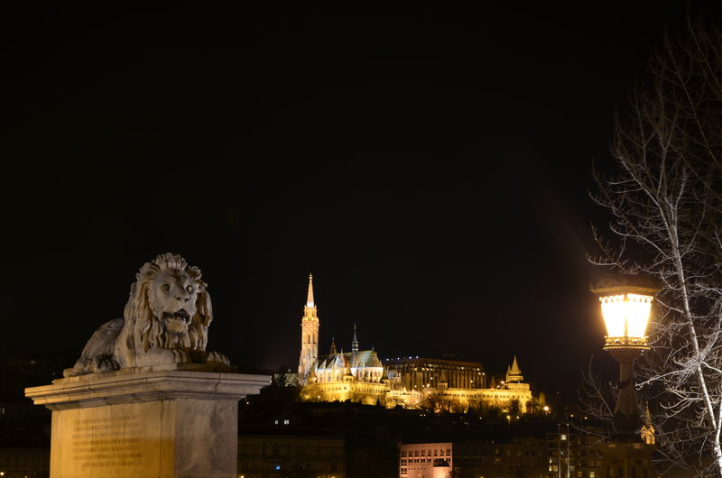 Budapest Castle Capital Cities  Capital City Danube Danube River Famous Place History Illuminated Lion Night Outdoors Street Light Tree