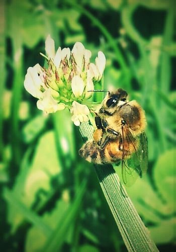 Xperia S Flower Bee