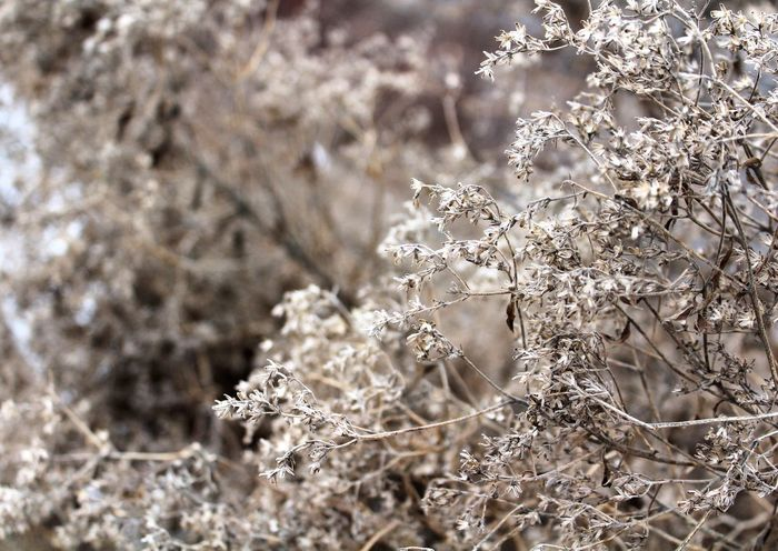 Sometimes dead can be beautiful too. Nature Tree Winter Cold Temperature Growth Beauty In Nature Branch Outdoors Frozen Fragility No People Close-up Snow Day plants First Eyeem Photo