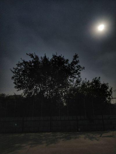 Tree Moon No