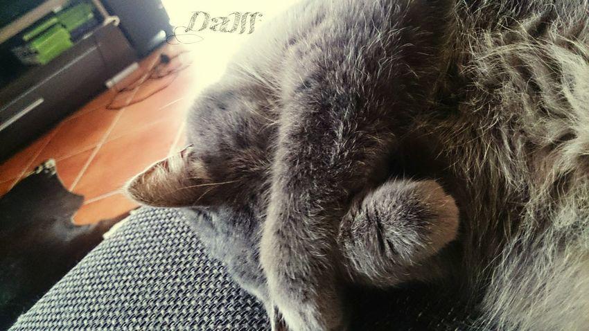 Animals Animal Taking Photos Snapshots Of Life Cat EyeEm Best Shots Relaxing Chilling