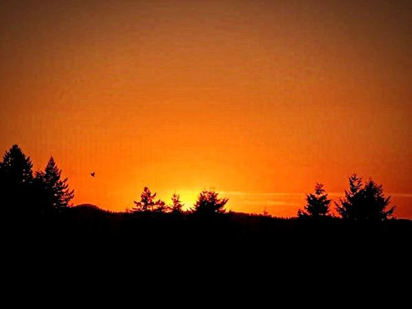 Silhouette Sunset Tree Nature Orange Color Beauty In Nature No People Scenics Tranquil Scene Tranquility Outdoors Sky Moon