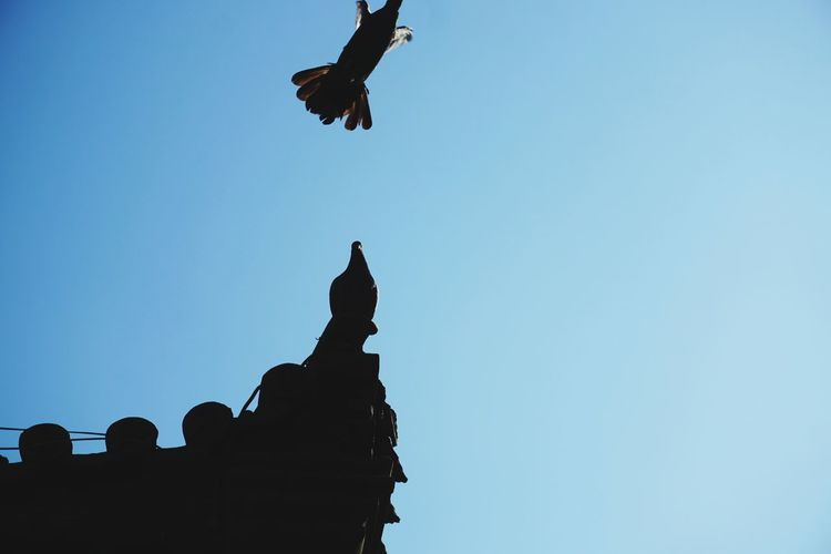 平遥古城 Bird Birds