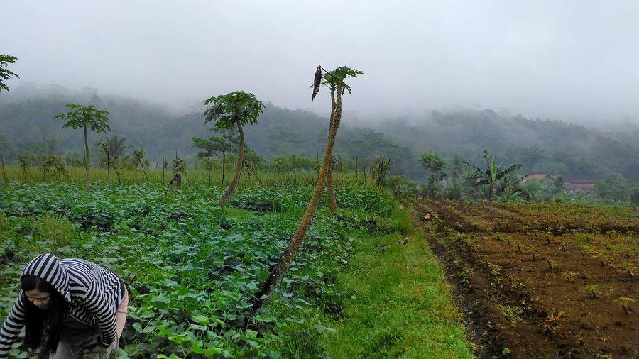 Farming Farm