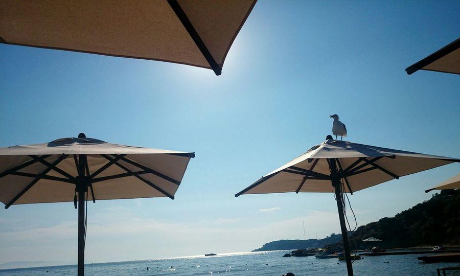Beach day today. Come find me in Astir Beach Vouliagmeni Greece Beach Monastiraki Vouliagmeni