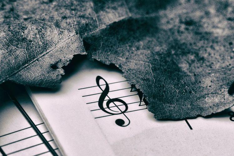 Close-Up Of Damaged Leaf On Sheet Music