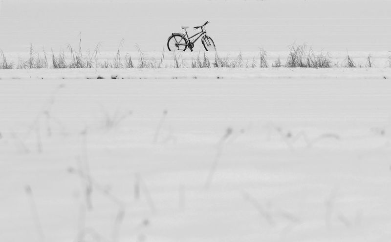 Rural winter scene with an abandoned city bike Abandoned Bike Bike Black And White Photography City Bike Climbed Out Of The Window Contrasts Curiousmoments Disappeared Fine Art Photograhy Forgotten Forgotten Bicycle Lonesome Bicycle Middle Of Nowhere Olympus OM-D E-M1 Mark II Rural Scene Snow Solitude And Silence Still Life With A Bike Still Life With An Abandoned Bike Stuck In Time Winter Winter 2017 Winter Solitude Black And White Friday Shades Of Winter