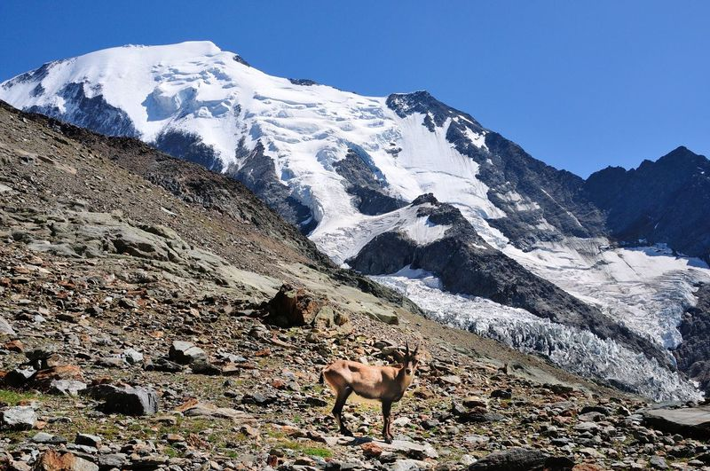 View of a horse on snow covered mountain