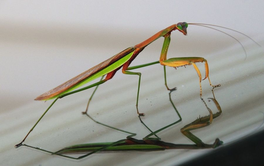 Praying Mantis One Animal Insect No People Animal Wildlife Nature Outdoors Amazing Nature Wildlife Day Beauty In Nature
