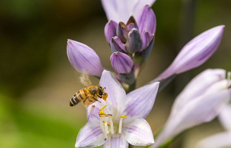 Beauty In Nature Honey Bee Flower Flowering Plant Animal Themes Insect Animal Wildlife Animals In The Wild Pollen Purple No People Close-up Flower Head Bee One Animal EyeEm Nature Lover EyeEm Close-ups