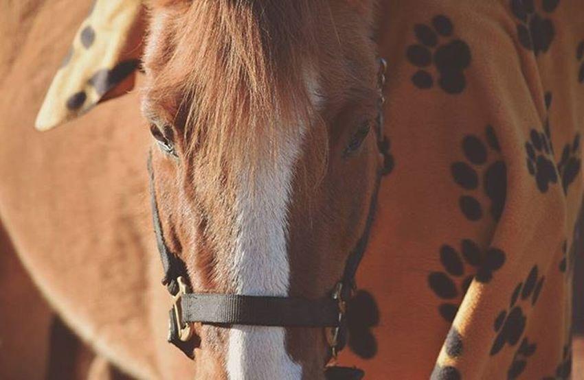 ♠♣Animalphotography Horses Pony Equestrian Horsephotography Equinephotography Nature Equestrianphotography Northcarolina Ncphotography Mypictures Equestrianlife Horselover Naturephotos Nikon Nikond3300photography Nikonphotography ♣♠