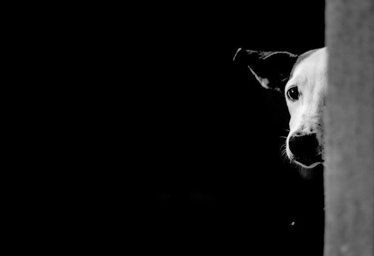 PeloVerde Pet Photography  Pet Portraits Petlover Animal Themes Blackandwhite Dog Domestic Animals One Animal Pet Petportrait Pets Portrait