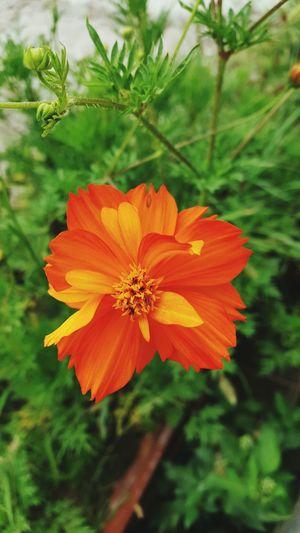Orange Flowers Enjoying Life Taking Photos Nature Flowers From My Garden Macro_collection