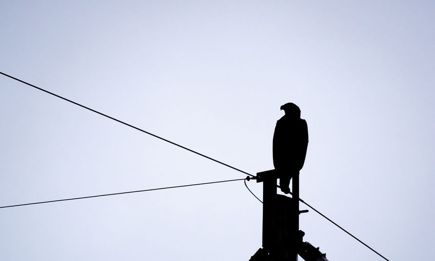 Low angle view of silhouette bird perching on cable against clear sky