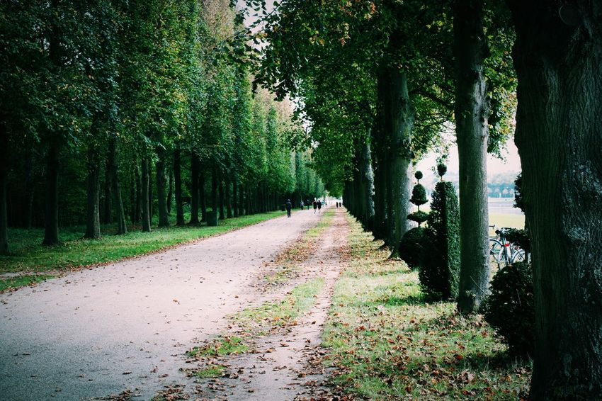 Beauty In Nature Forest Growth Nature No People Outdoors Road Scenics Tranquil Scene Tranquility Tree Treelined