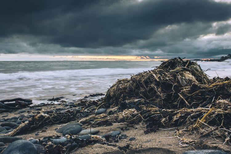 Seaweed at beach against cloudy sky