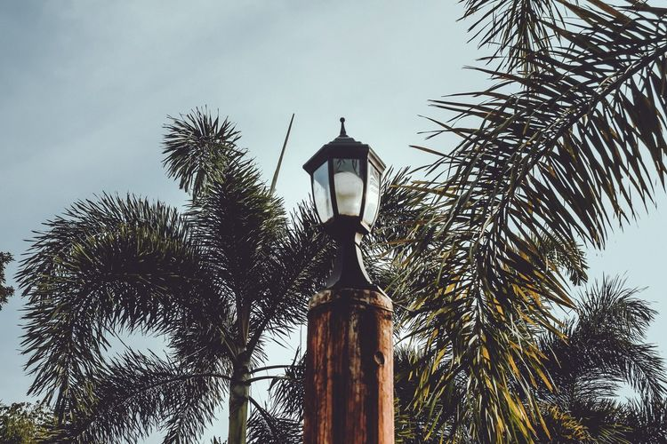 Meeting Place Native Design Vacations House Sky Plants Lights Streetlights Lamp Post Low Angle View Palm Tree Tree Street Light Outdoors Day No People Beauty In Nature Tree Trunk Growth Nature Branch
