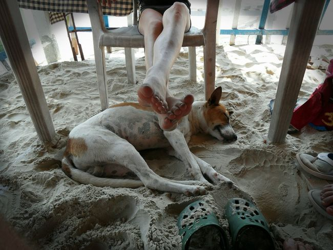 Out of respect 💕 sweet dog 💕 Beach picture with other eyes... Human Leg Domestic Animals One Animal Sand Dog Human Body Part Respect Love Dog Sleeping  Beach Life Compassion India Life India Animal Themes Sweet Moments Simple Things In Life Simple Beauty Reality Real People Deep Feeling Out Of Respect This Is Love Emotional Photography Touching Moments Break The Mold Art Is Everywhere TCPM EyeEmNewHere Pet Portraits