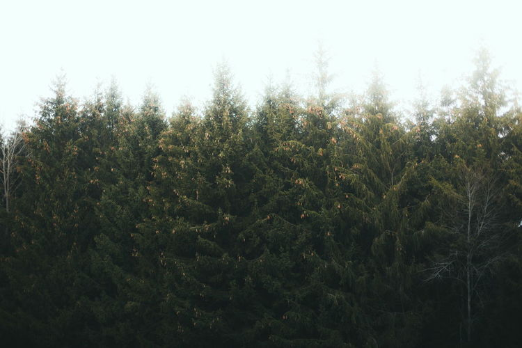 Nature Landscape Nature_collection Nature Photography Naturelovers Trees Light Forest Sky Mood