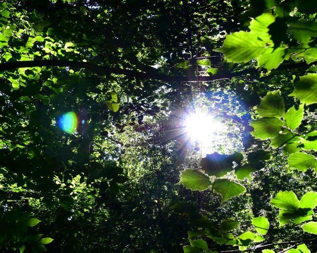 Backlit in the Forest Mols Bjerge Molsbjerge Backlight Beauty In Nature Nikon1 Nikon1j4
