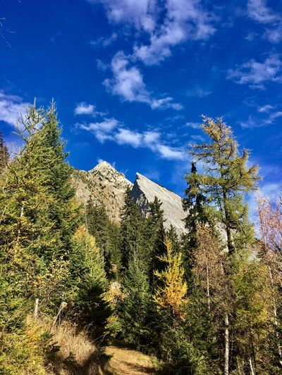 Mountain Autumn Colors Autumn Forest Cloud - Sky Sky No People Nature Outdoors Beauty In Nature Blue Valais Catogne
