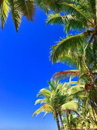 Palm Tree Blue Clear Sky Nature Beauty In Nature Outdoors Sky Day Costa Rica Surfinglife BrunoCarvalhoPhotos Beach