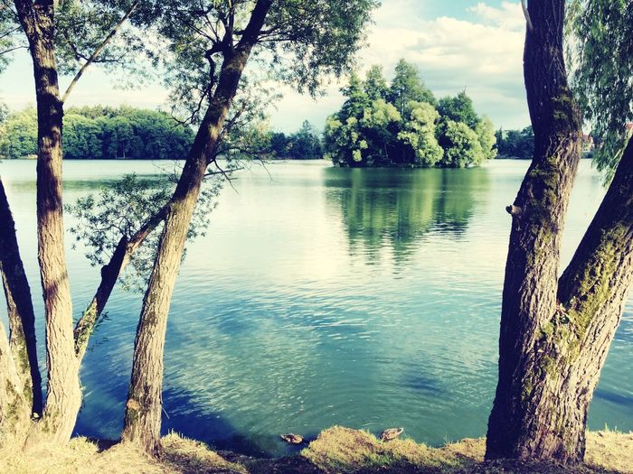 Tree Lake Water Tree Trunk Nature Tranquil Scene Beauty In Nature Tranquility Scenics No People Outdoors Day Growth Sky Landscape Branch Animal Themes