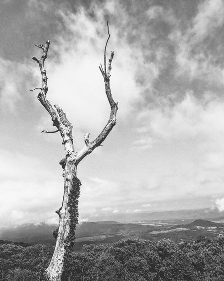 The Great Outdoors - 2017 EyeEm Awards Landscape Sky Tree Outdoors Nature Tranquility Day Bare Tree Tree Trunk Beauty In Nature No People Branch Cloud - Sky Adventure Beoutside Hike Nps Travel The Great Outdoors - 2017 EyeEm Awards