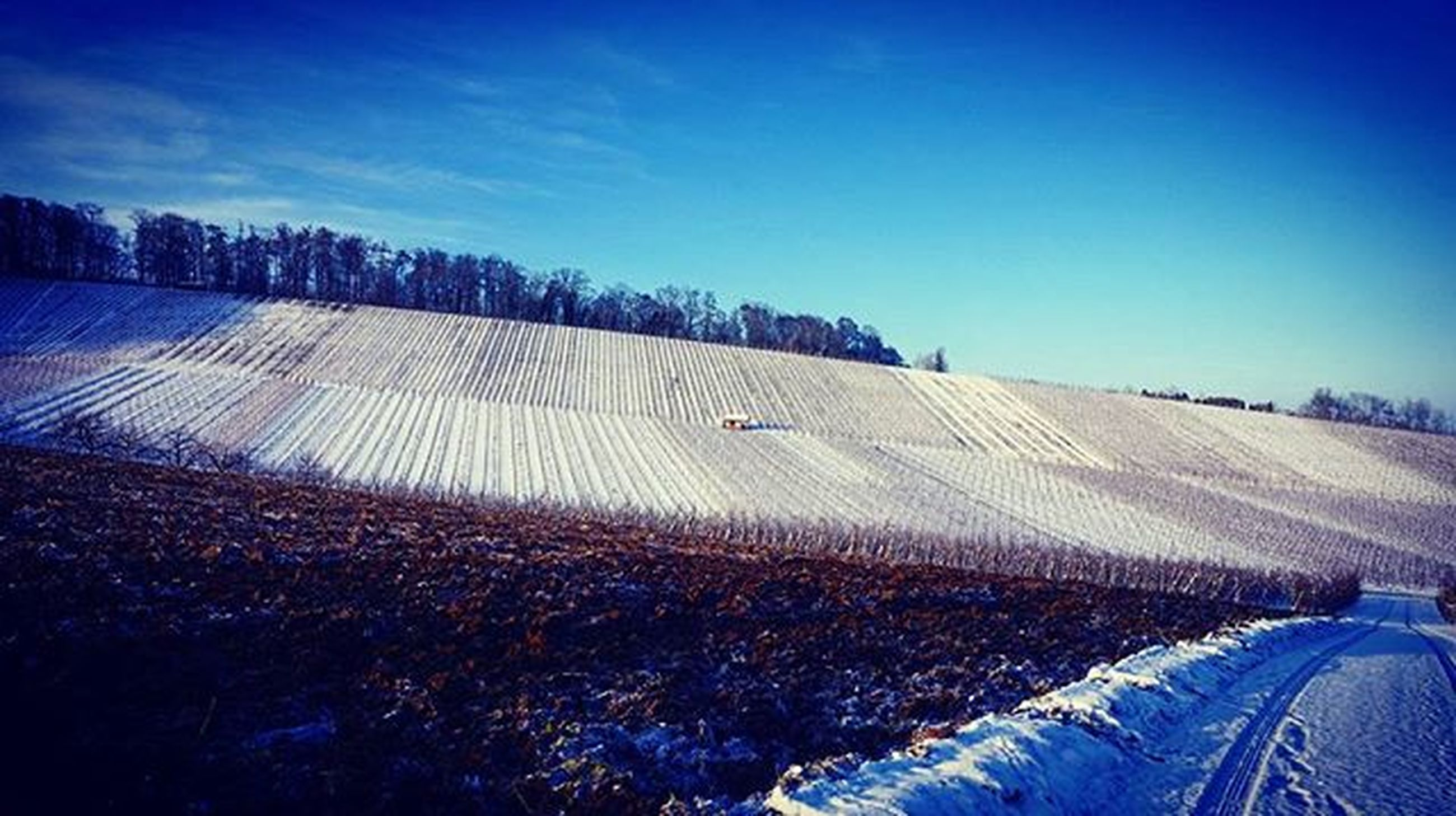 landscape, blue, field, clear sky, copy space, building exterior, sky, architecture, built structure, rural scene, tranquil scene, winter, tranquility, house, nature, scenics, snow, outdoors, agriculture, sunlight