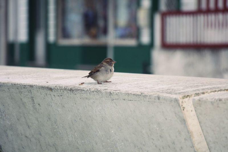 Bird perching on retaining wall