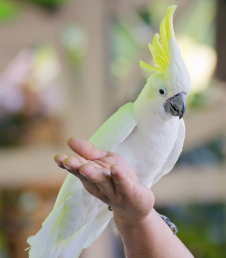 Cropped image of hand holding bird perching outdoors