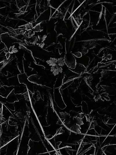 Monochrome Photography Frost Close-up Weather Beauty In Nature Nature Plant Tranquility Botany Naturerox Treethugger Non-urban Scene No People Winters Here Misty