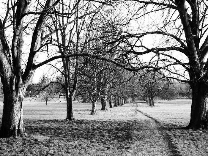 treelined path British Winter Path Winter Bare Tree Beauty In Nature Branch Country Path Day Direction Environment Field Land Landscape Nature No People Outdoors Park Plant Scenics - Nature Tranquil Scene Tranquility Tree Tree Trunk Treelined Trunk Winter Trees