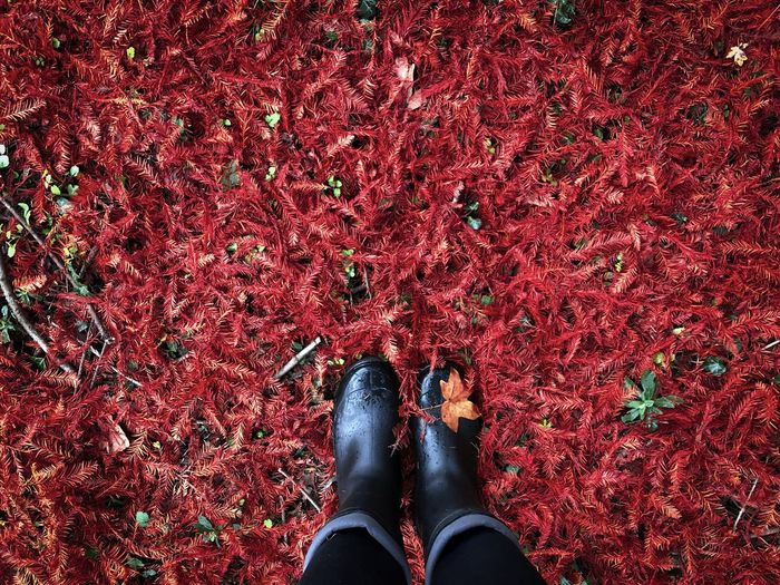 Low section of person standing on red autumn leaves