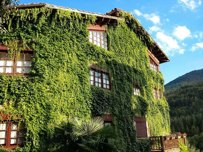 In Bagà, Catalonia. Vinya verge. Architecture Day Built Structure Outdoors No People Low Angle View Nature Sky Building Exterior Growth Plant Tree Grass Beauty In Nature Vinya Verge Parthenocissus
