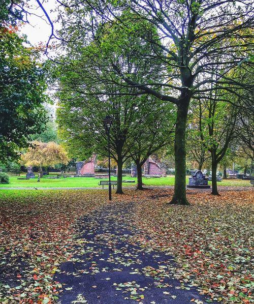 Autumn Autumn Leaves Churchyard Tadaa Community