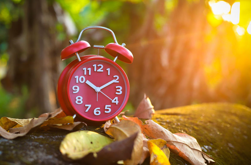 Red Alarm Clock Alarm Clock Clock Plant Part Number Time Leaf Tree Clock Face Nature Change Red No People Autumn Wood - Material Focus On Foreground Plant Accuracy Communication Beginnings Copy Space Minute Hand