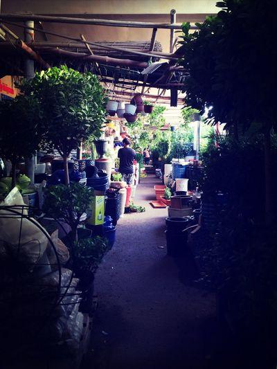 Plants shopping