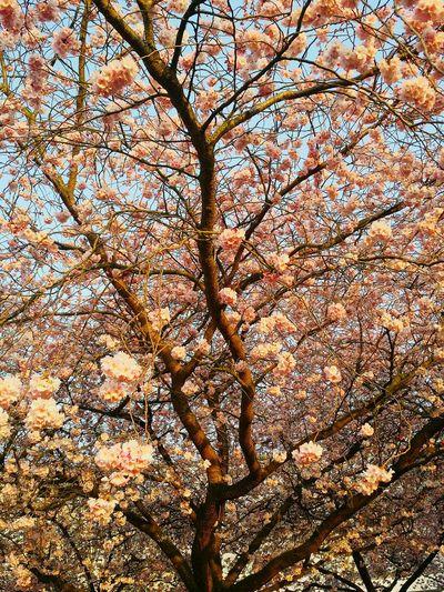 Frühling in kaarst First Eyeem Photo