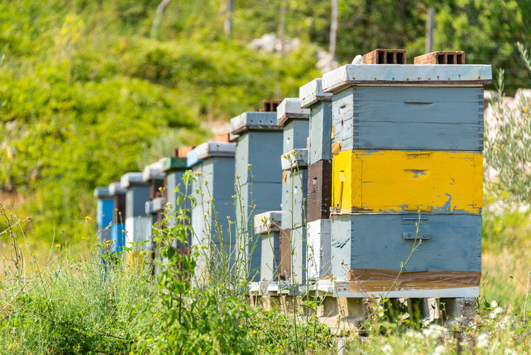 Beehives painted in pastel colors standing on a green meadow. rural summer landscape.