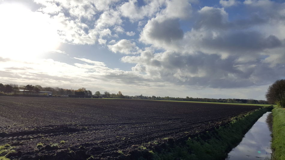 Early morning. Agriculture Crop  Rural Scene Farm Field Cloud - Sky Growth Nature No People Day Outdoors Landscape Beauty In Nature Food Sky Water Freshness